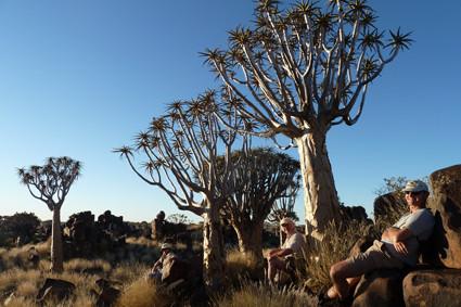 Köcherbäume bei der Mesosaurus Fossil Site