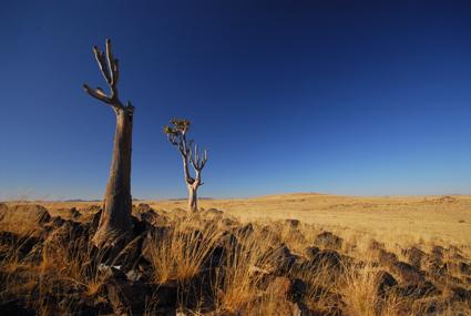 Namib bei Wüstenquell/NAM