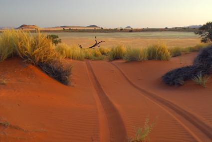 in Namib Rand