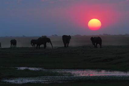 Abendstimmung am Chobe