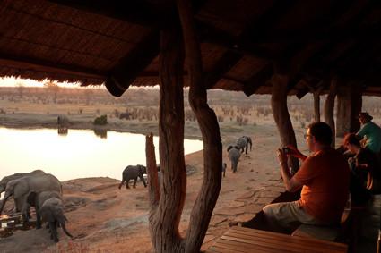 Wildbeobachten in Zimbabwe