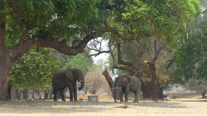 am Zambezi
