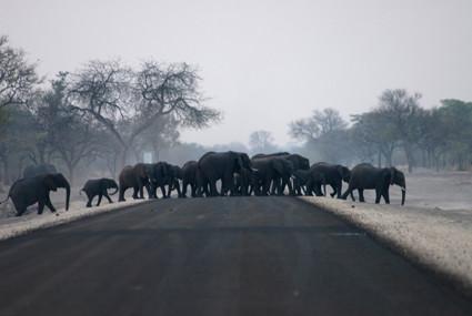 Straßenverkehr im Mudumu Nationalpark