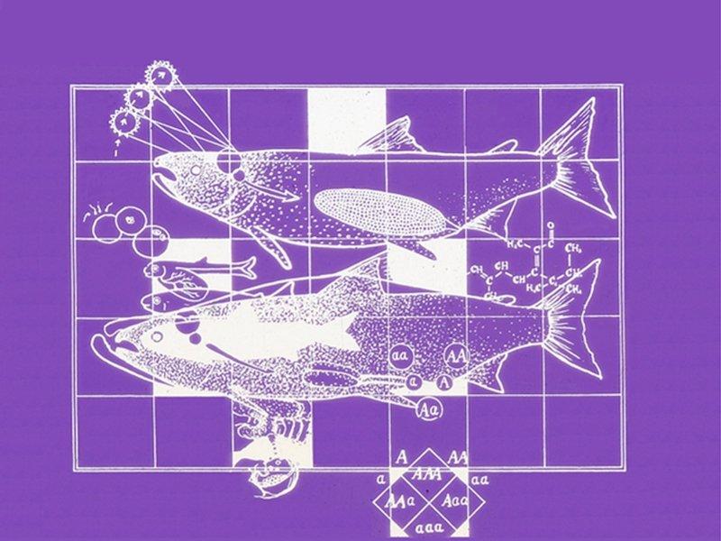 Diagrama  Biología reproductiva salmónidos