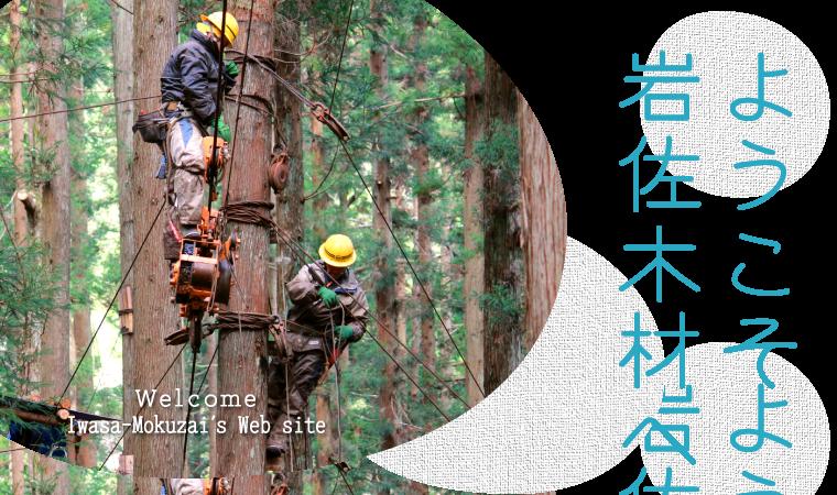 架線集材による林業会社、岩佐木材 有限会社【新潟県村上市山北】