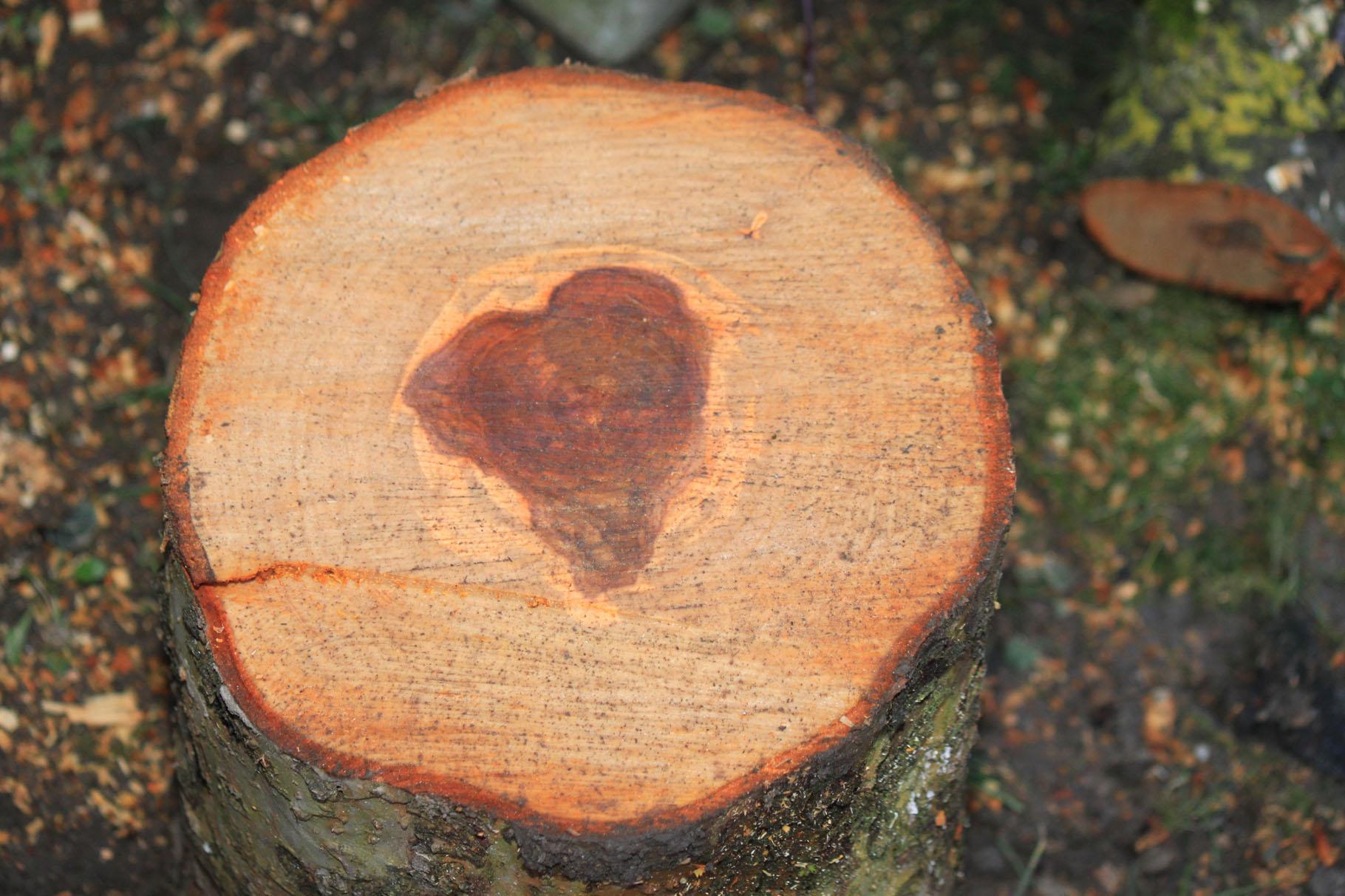Herz-licher Baumstumpf