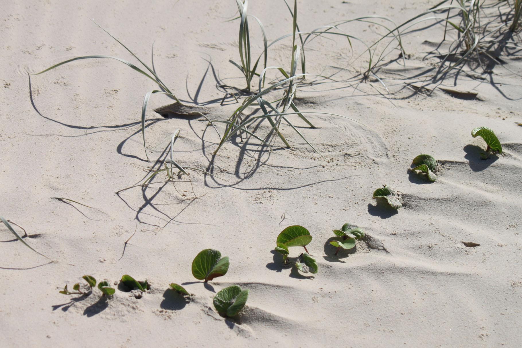 Genügsamkeit im Sand