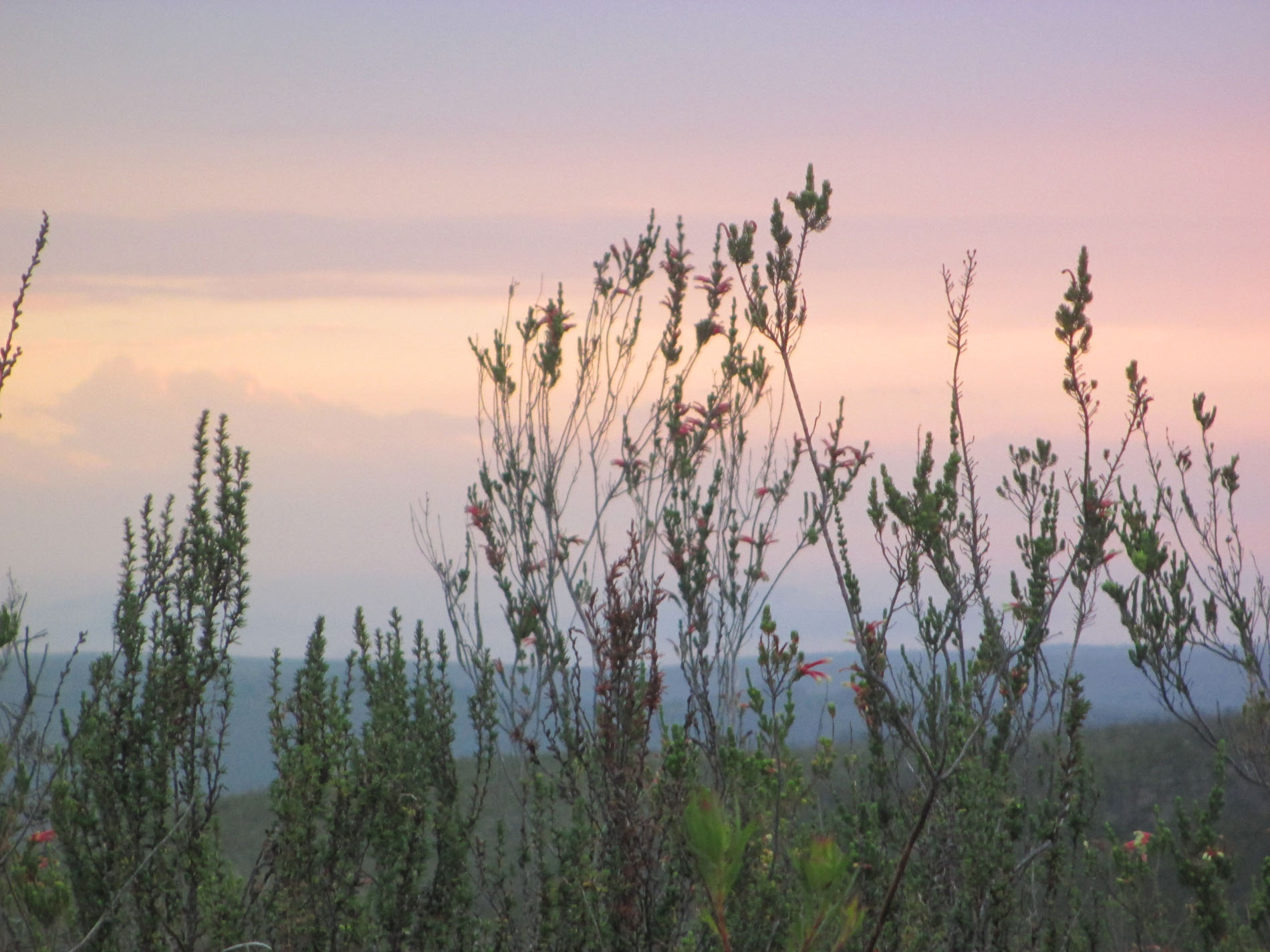 Abendsafari Gondwana Game Reserve