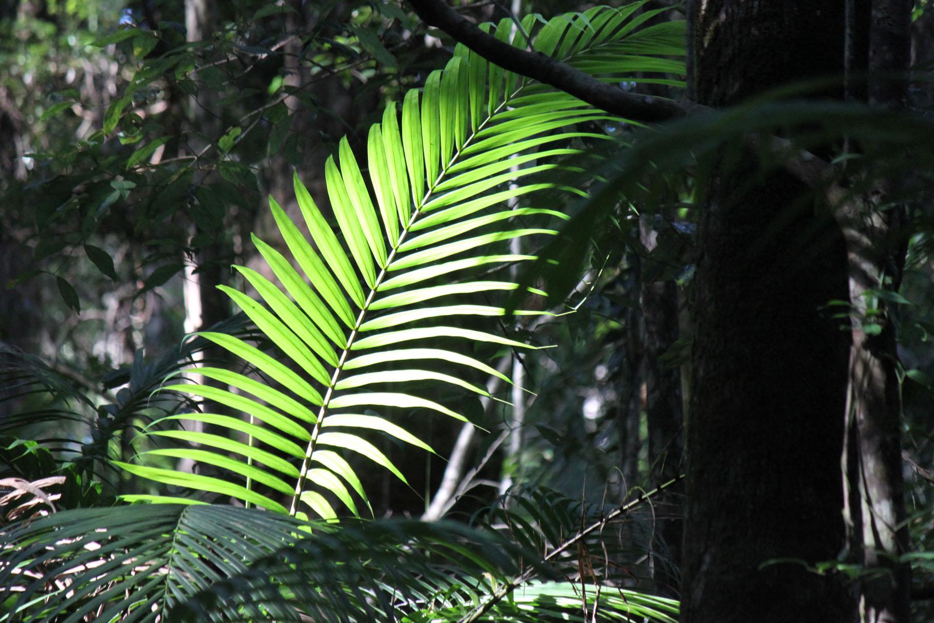 Licht im dunklen Regenwald