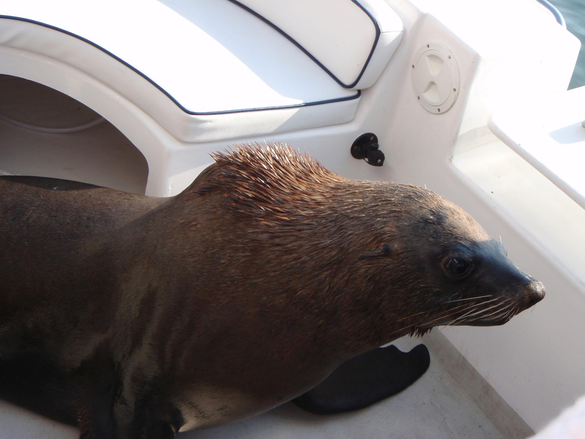 Freddy der Touristenfreund, Walvis Bay