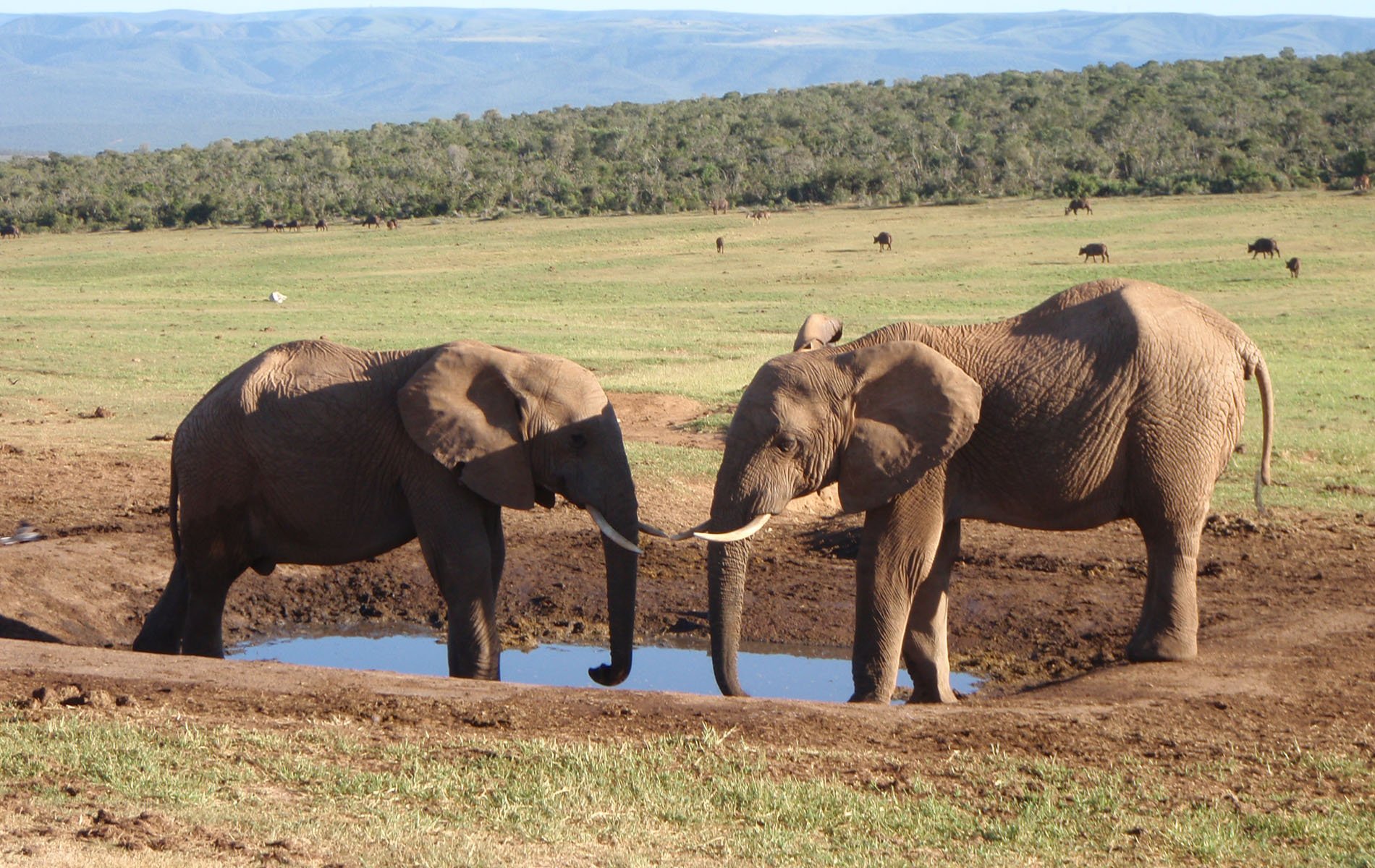 Elefanten im Addo Park