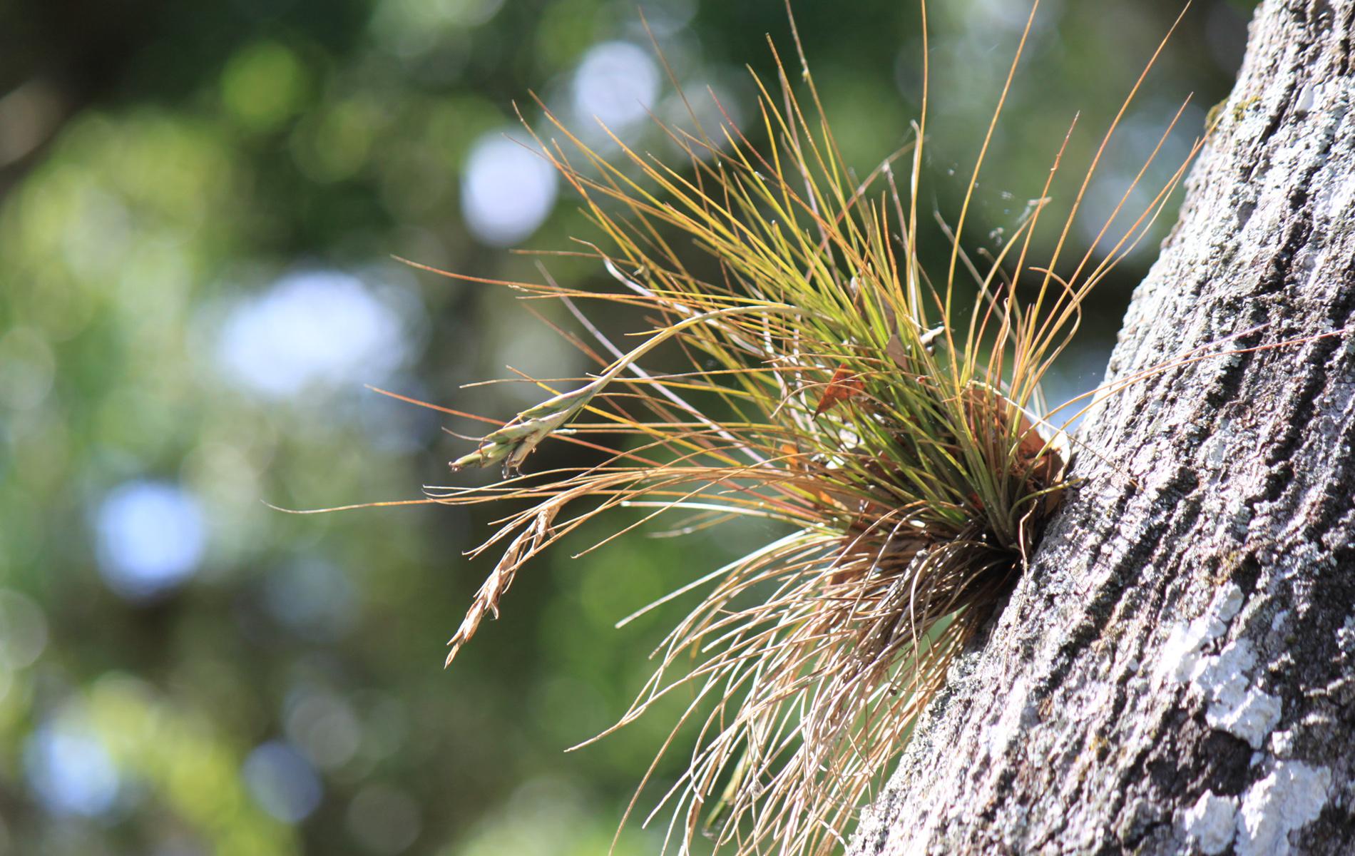 Flora der Everglades