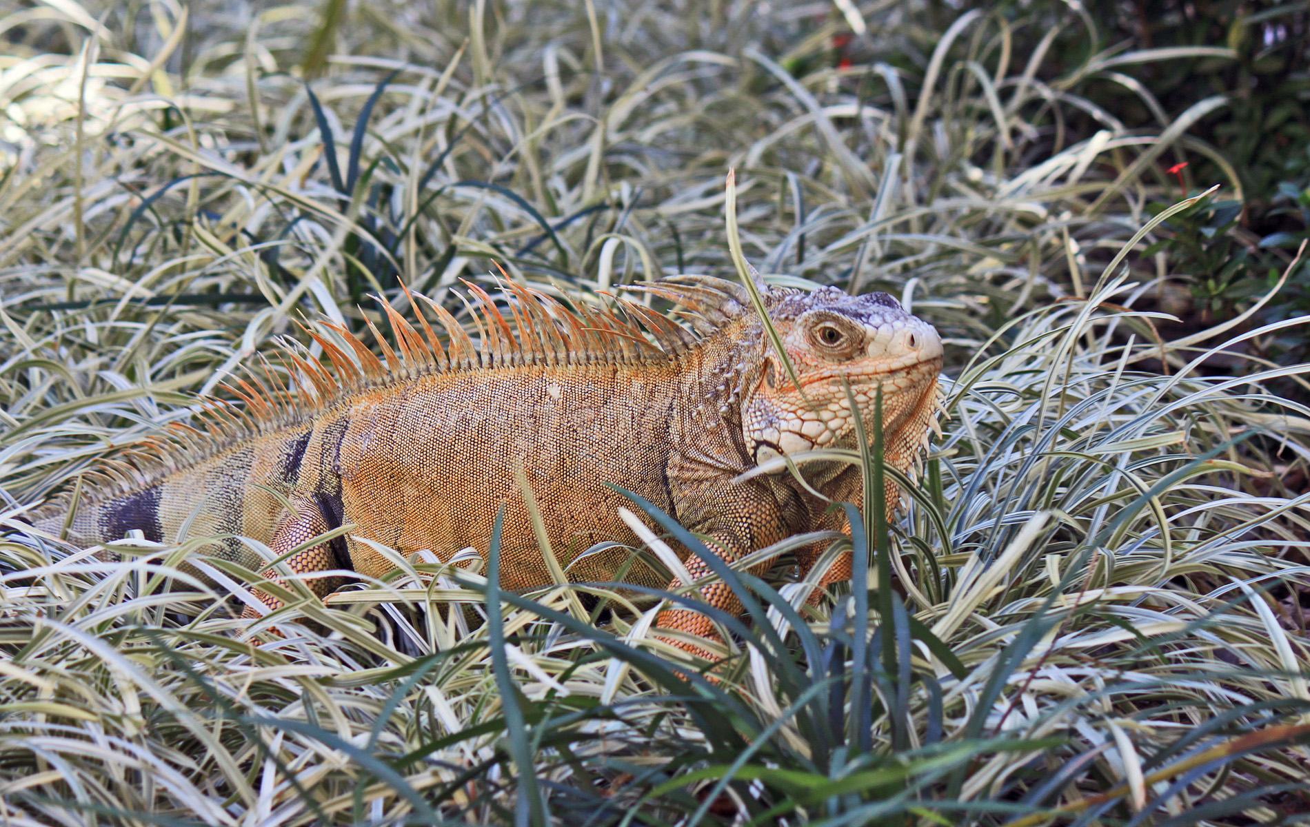 Fauna der Everglades