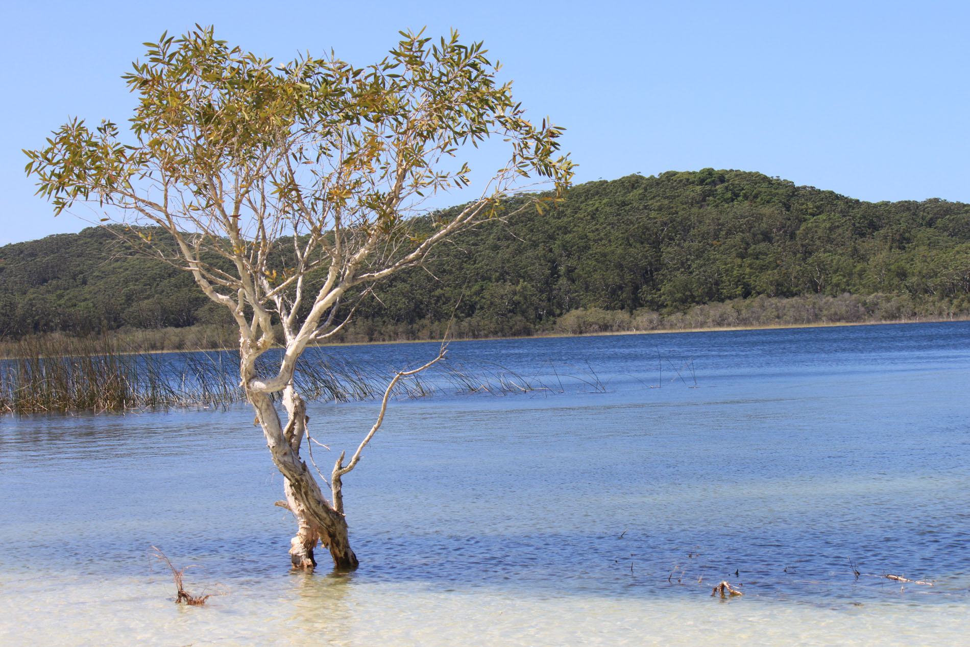 Teatree Oil Lake, Fraser Island