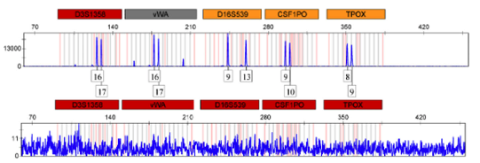 DNA resistance to radiation field: forensic genotyping in a radiological incident scenario""