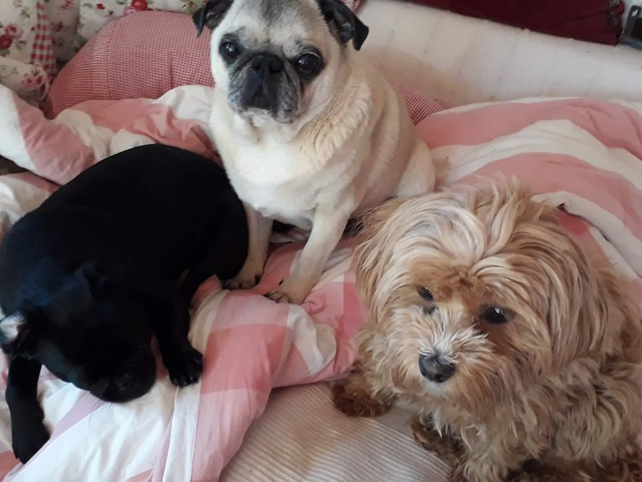 Bowdi, Trudi und Toni