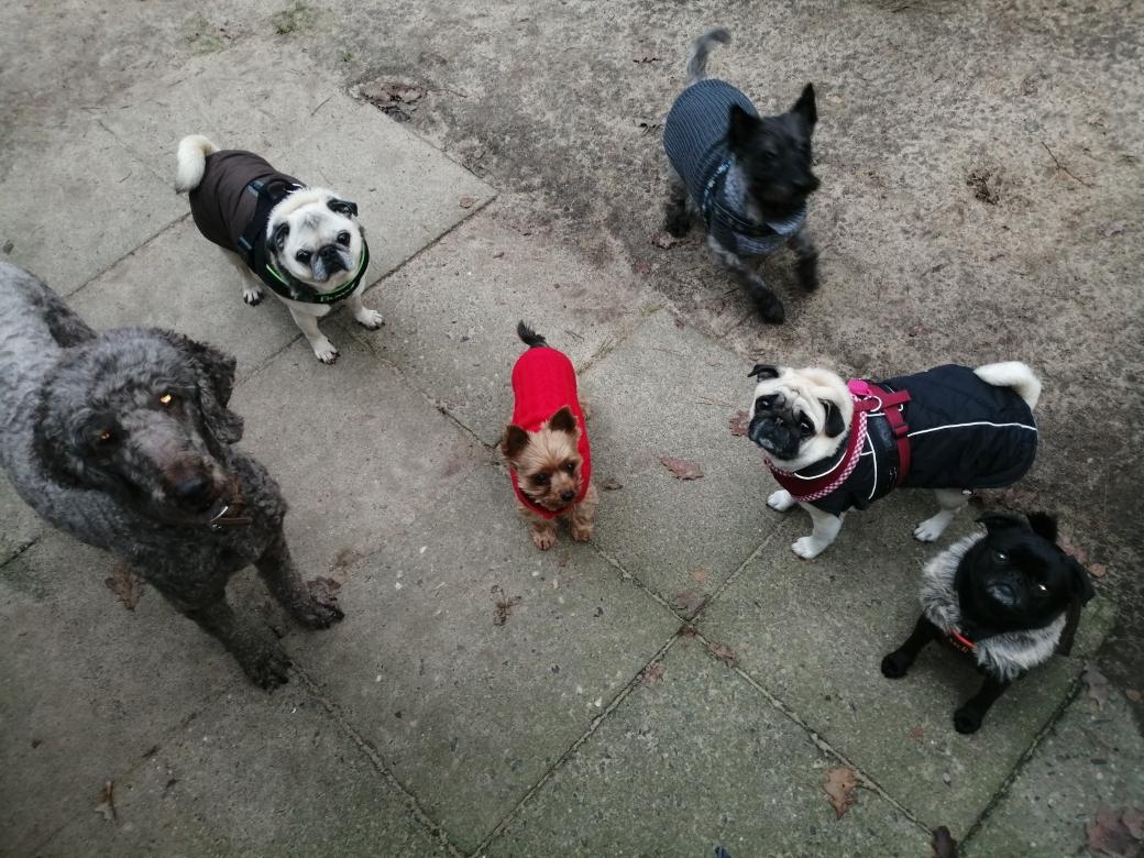 Bella, Bowdi, Eddy, Lui, Alma und Trudi