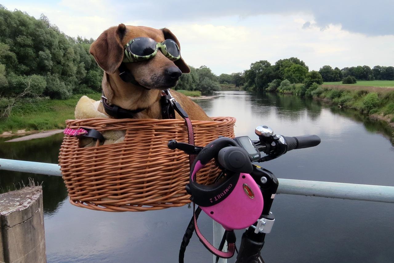 Fahrrad- und Hundegruppen wieder da