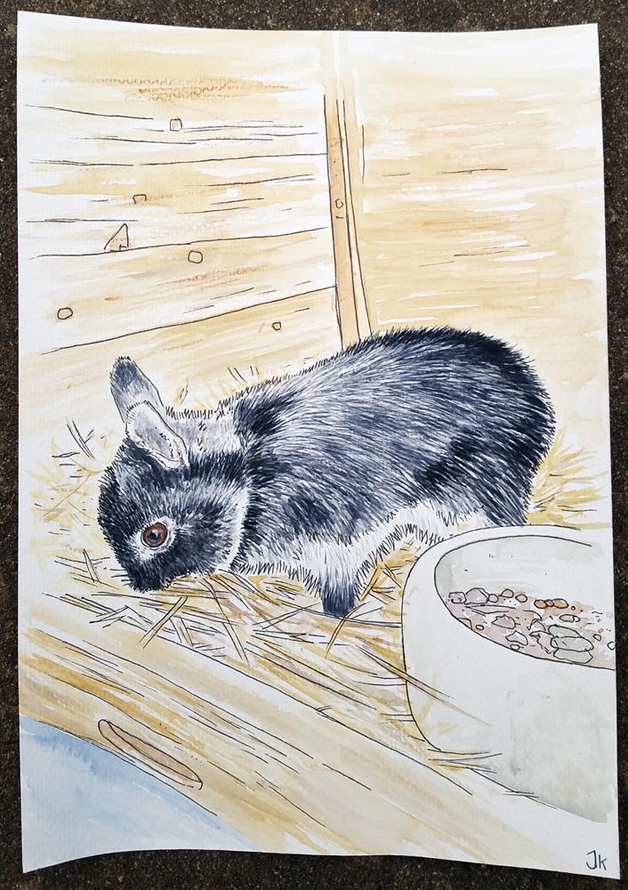 Balu the Bunny