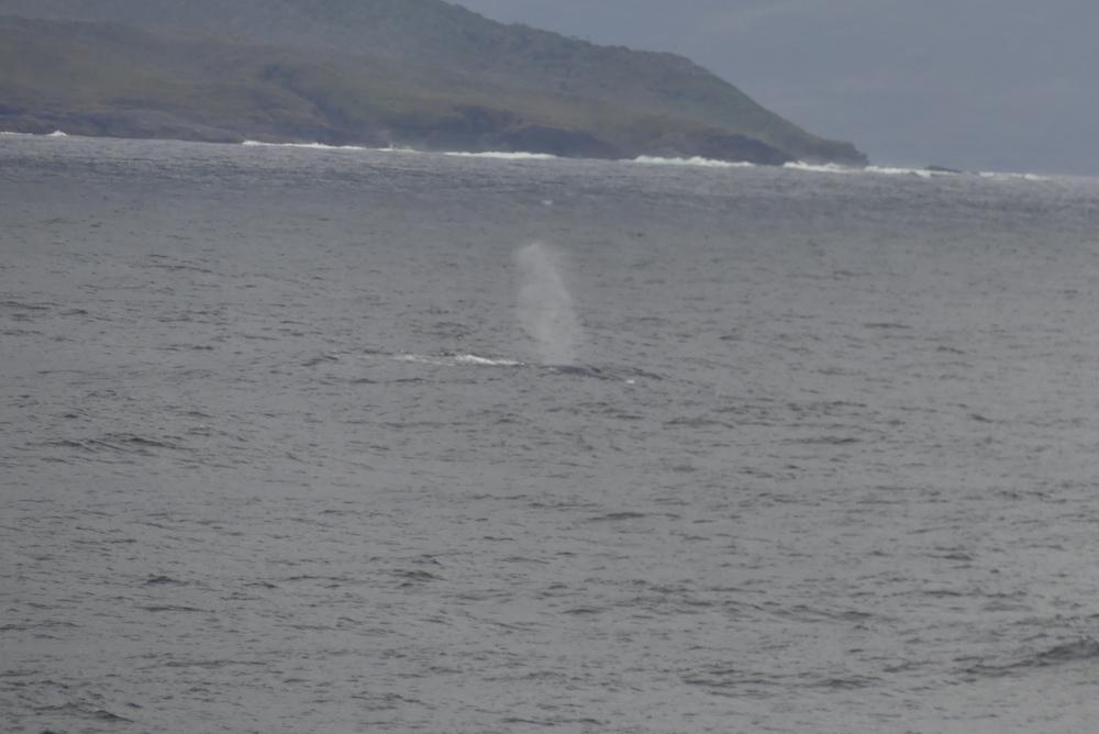 Le souffle de la baleine