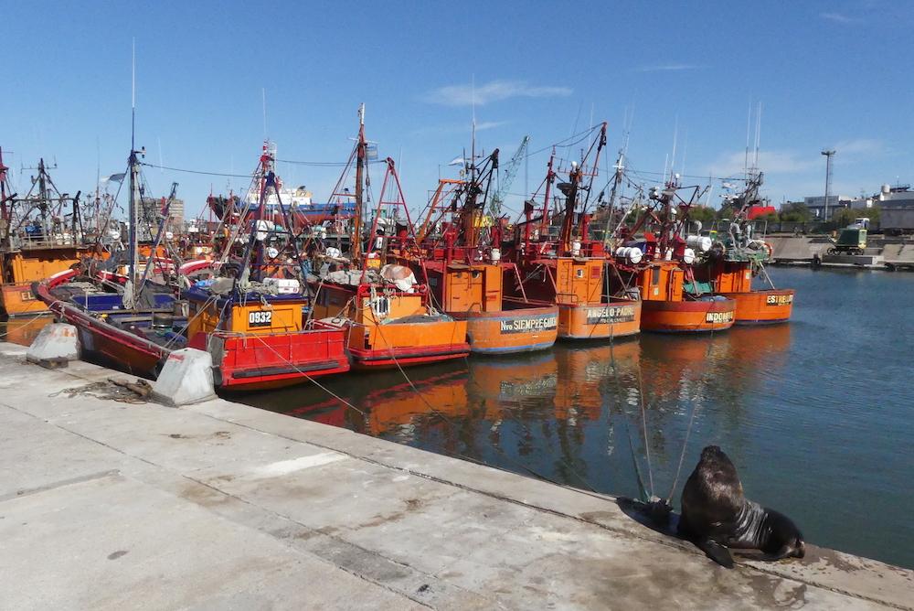 Le port de pêche de Mar del Plata avec ses lions de mer