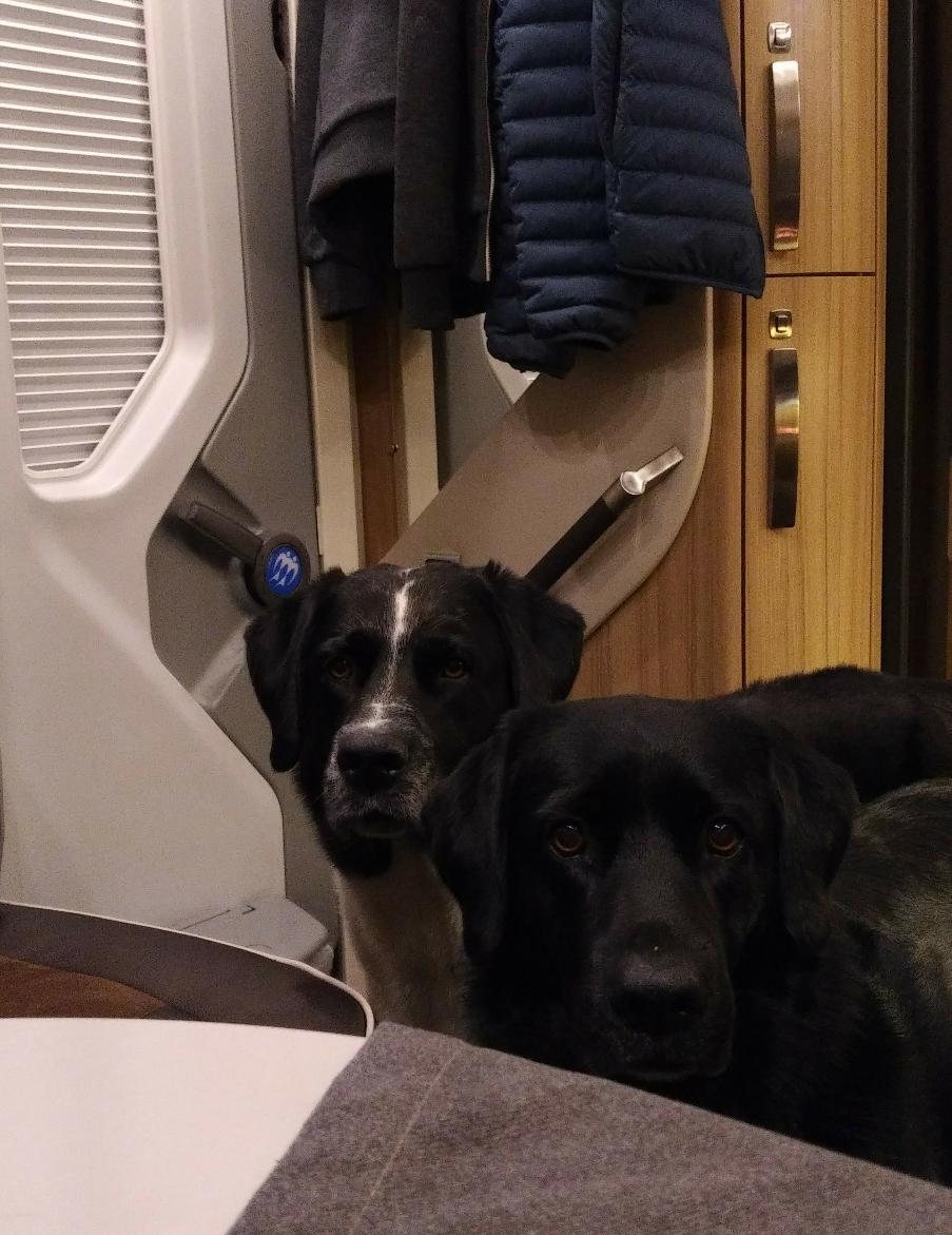 Attenzione di cani! :-)