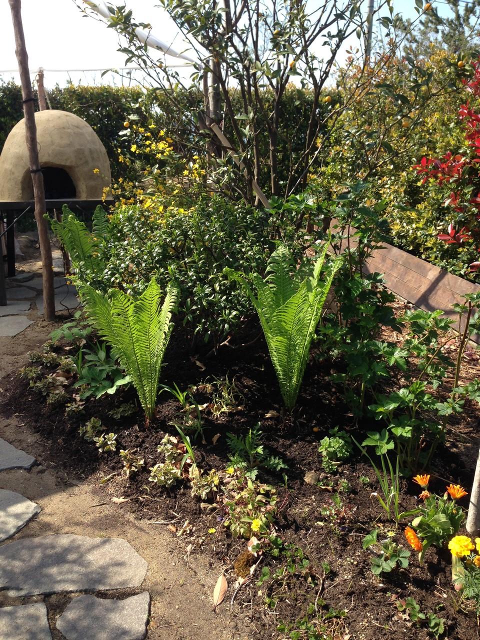 下草はそれぞれのあるべき場所へ。人へ有用な植物や植物同士が助け合い(コンパニオンプランツ)育つをデザインしています