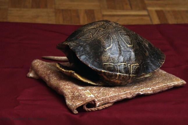 Schildkrötenpanzer-Trommel für Ritual © SKK