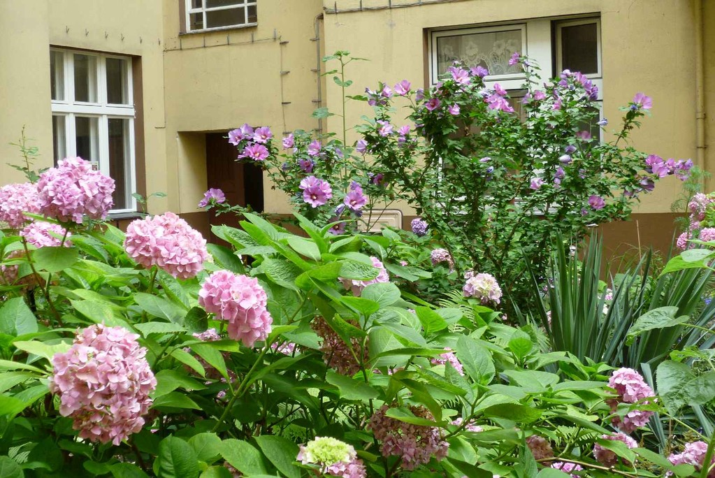 5. Hinterhofgarten, noch ohne Gerüst  © Diana Schaal