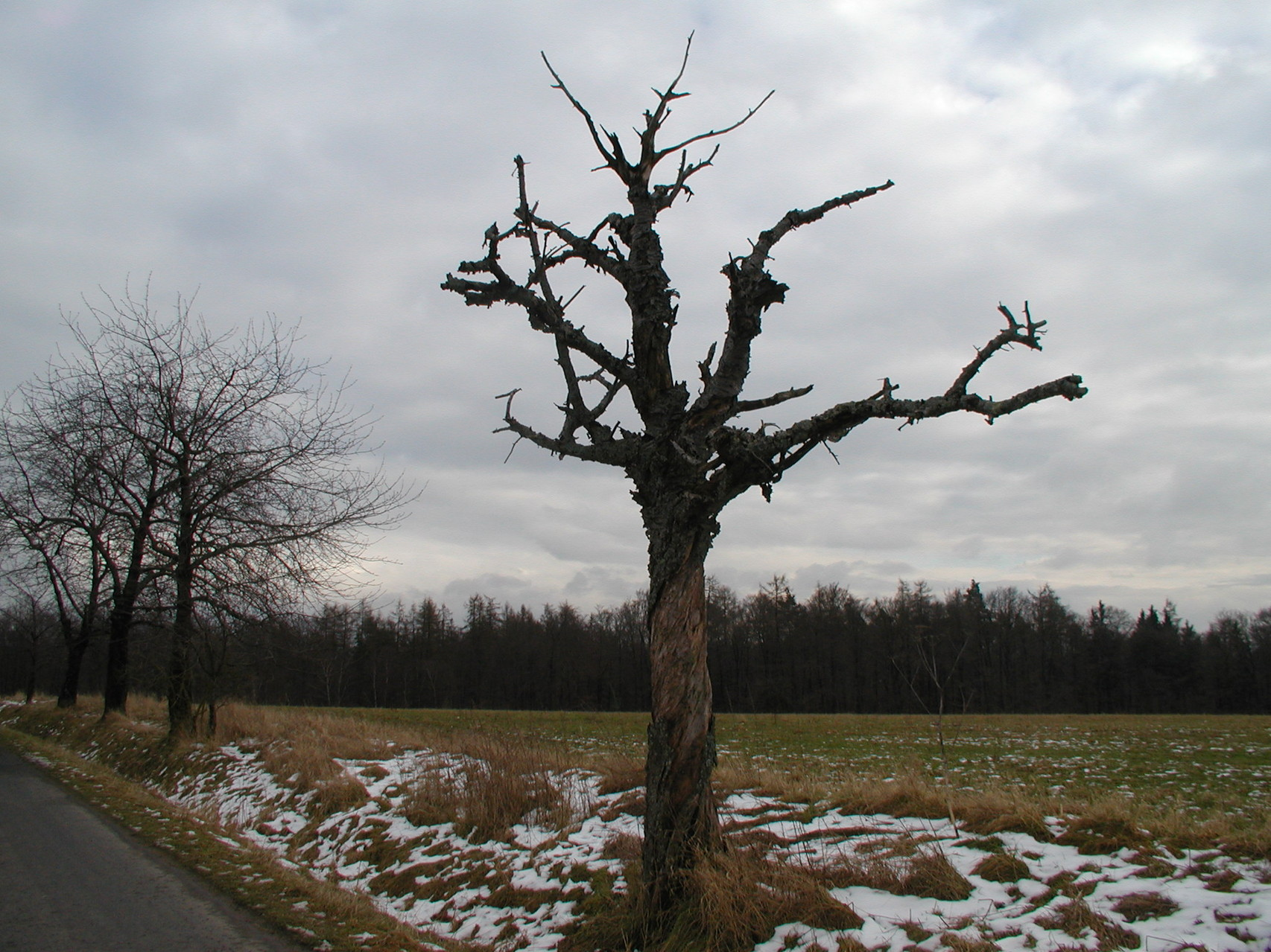 Rundwanderung am 17. Februar - Unterafferbach
