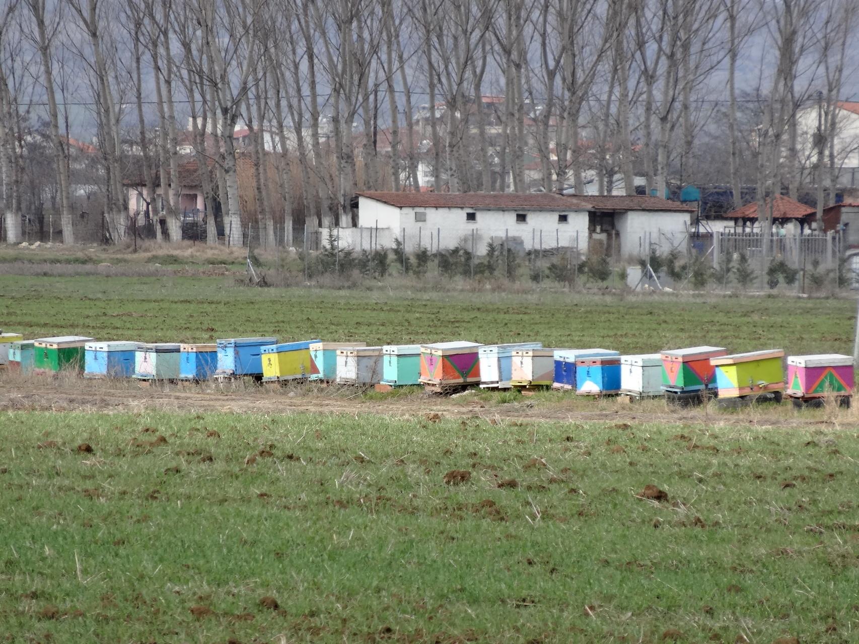 Des ruches colorées