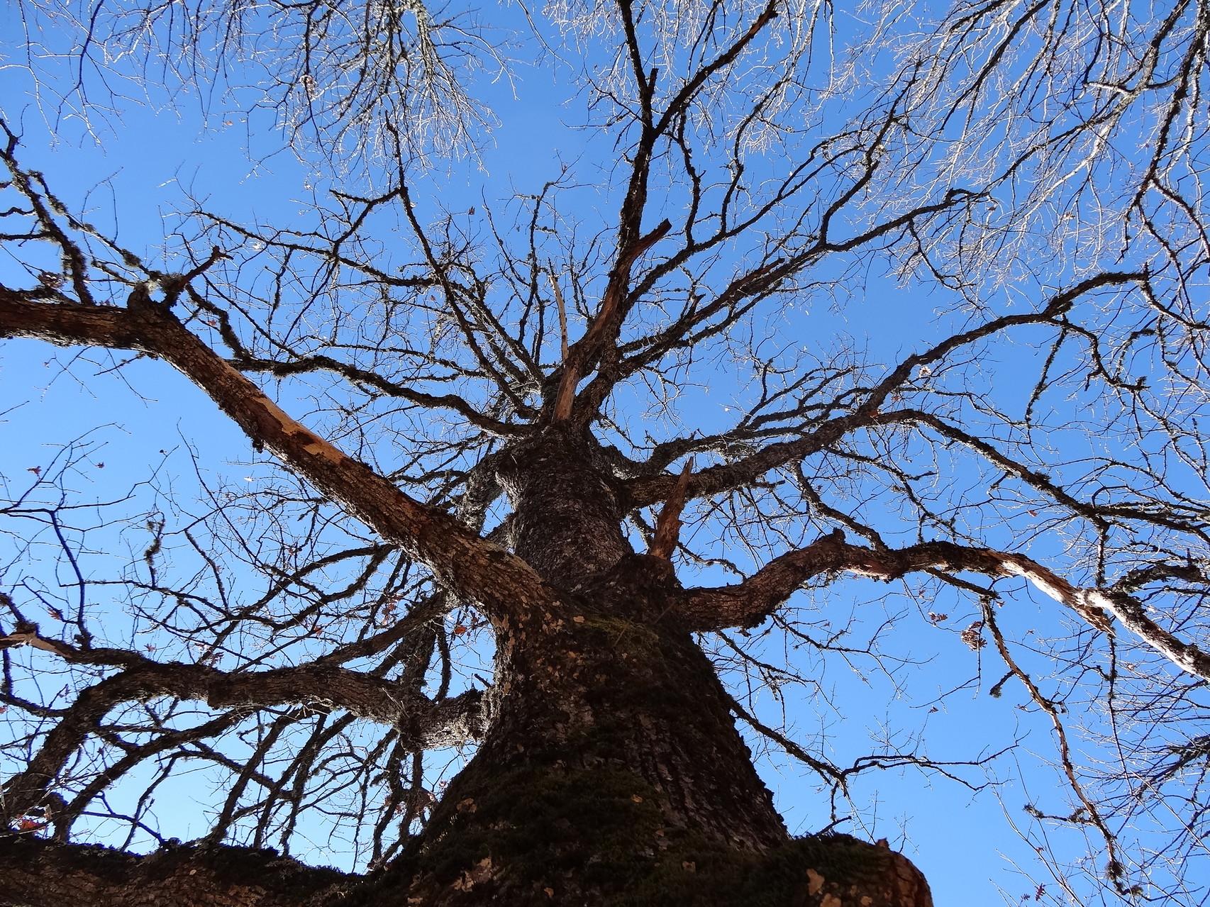 A Paranesti, je me hisse aux arbres