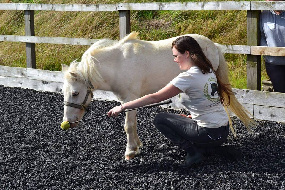 Rascal from East Devon Riding School learning to nose target and getting rewarded with scratches. (Photo by Millie Moore)