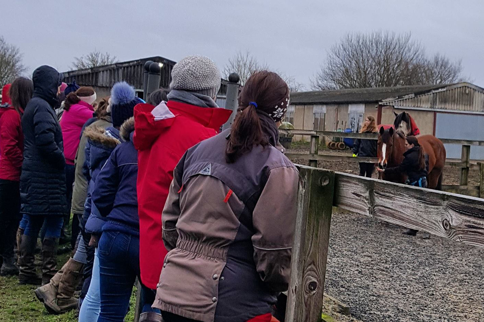 Demonstrating how to get started with positive reinforcement at Nine Acres Equestrian Centre