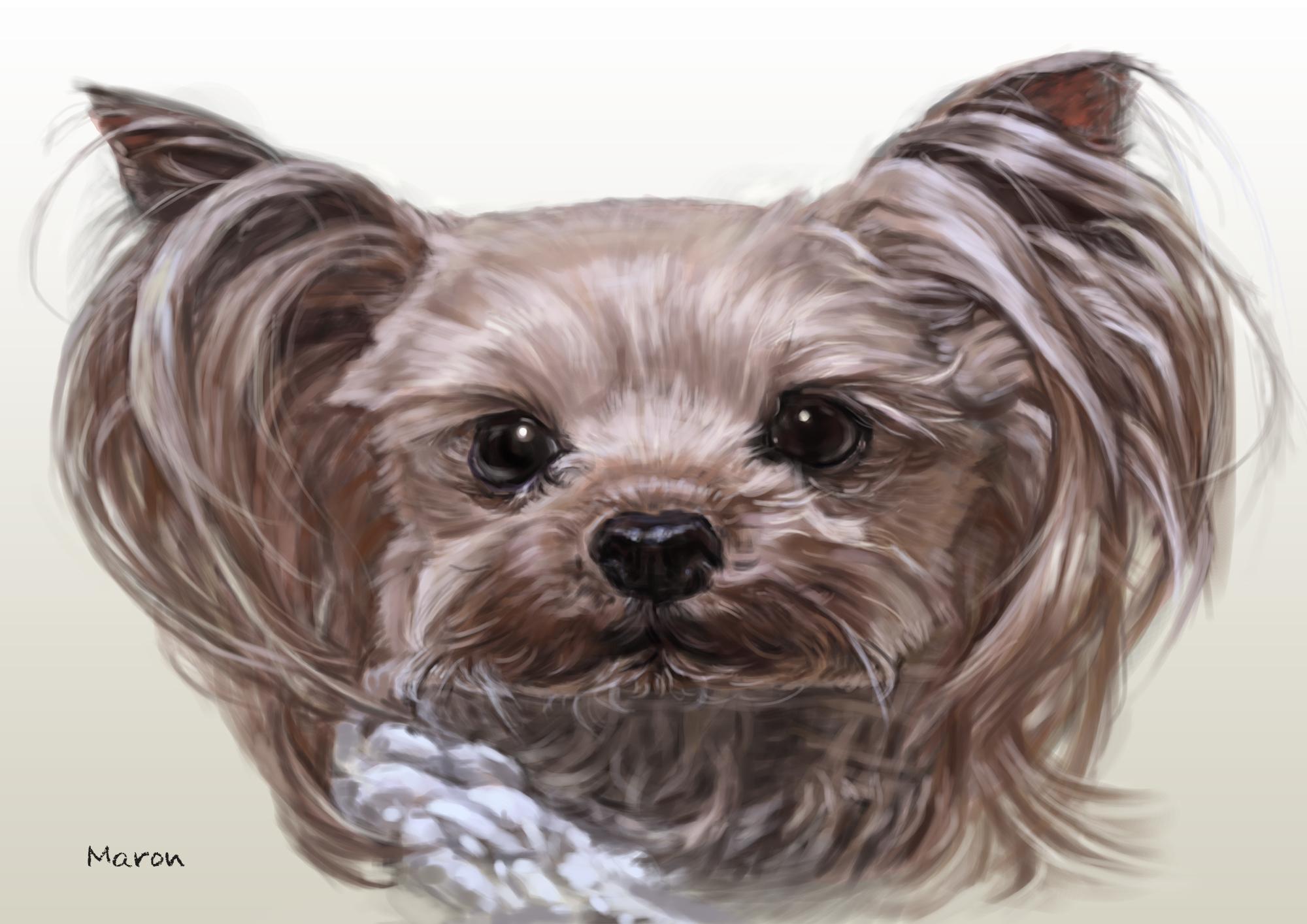 ペットの肖像画、動物の絵