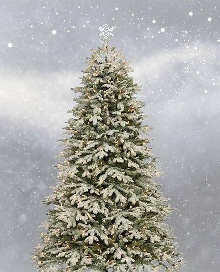 Der Weihnachtsbaum.Der Weihnachtsbaum Wird Aufgestellt Kästorf