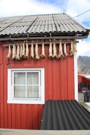 Henningsvaer - und überall Stockfisch