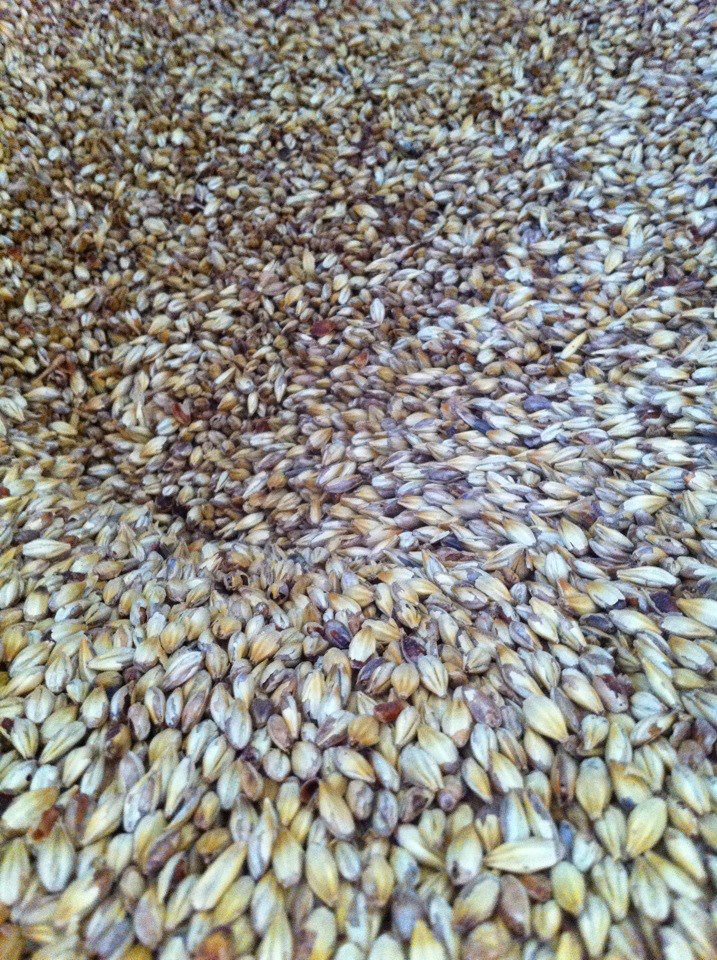 milling in crystal malt