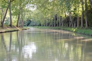 Platanes le long du Canal du Midi