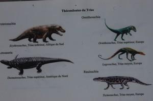 les ancêtre des dinosaures