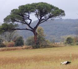une cigogne dans la vallée de l'Hers