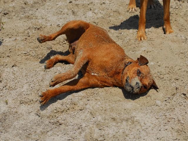Ich gehe lieber ein Sandbad nehmen...