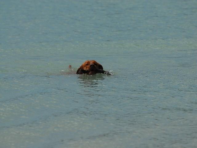 Ich kann richtig schwimmen