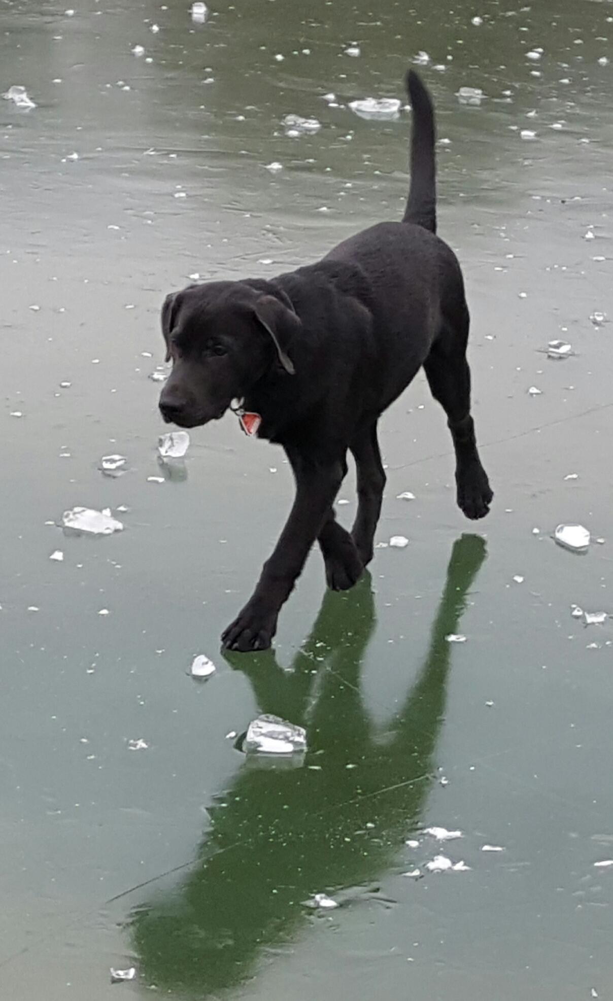 Auf dem zugefrorenen See spazieren war cool.