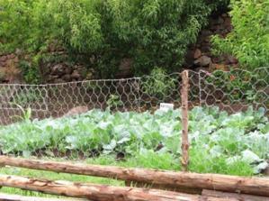 Vista del sector al aire libre consagrado al cultivo de las coles del Biohuerto Educativo de la escuela pública de Pacor (Cusco - Perú)