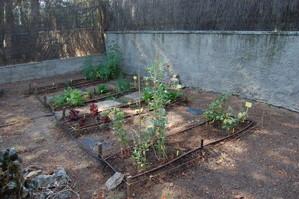 Cuatro bancales, parte esencial en la organización de una rotación de cultivos (Madrid - España)