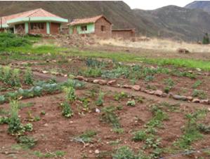 El sector a la intemperie, asignado a las especies que resisten el clima de altura, del Biohuerto Educativo de la escuela de Caicay (Cusco - Perú)