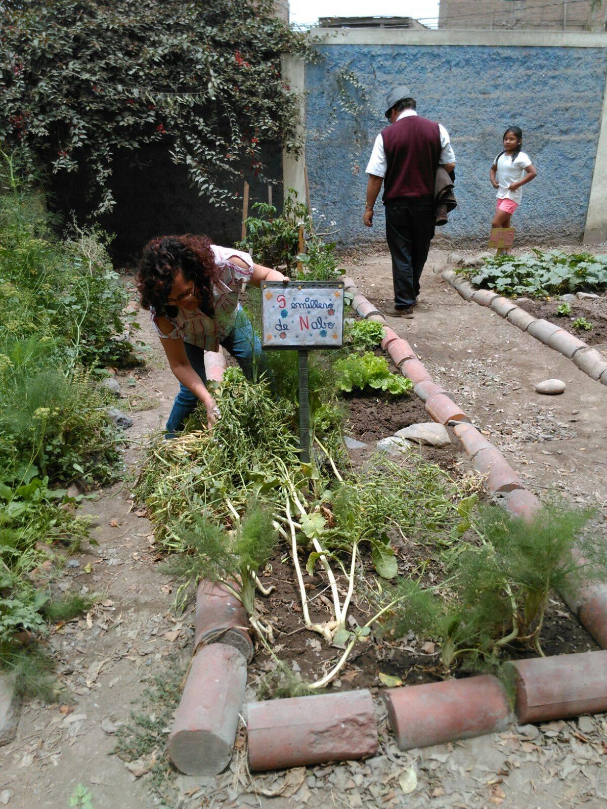 Profesora Sofía enseñando semillero de nabo