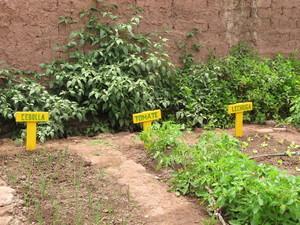 Parcelas de cebollas, tomates y lechugas, especies que crecen gracias al Biohuerto Educativo a más de 3 500 m.s.n.m. (Cusco - Perú)