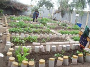 Las parcelas delimitadas y el espantapajaros del Biohuerto Educativo del colegio Suecia de Año Nuevo del distrito de Comas (lima - Perú)